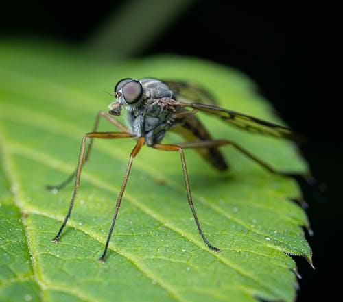 Foto d'estoc gratuïta de abdomen, ala, animal