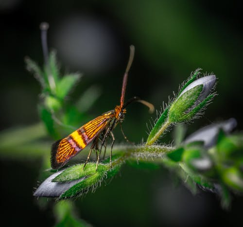 Foto d'estoc gratuïta de a l'aire lliure, animal, antena