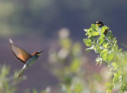 Free stock photo of animals, bird, bird flying