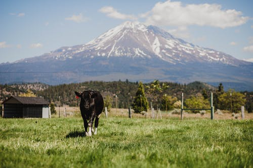 Free stock photo of agriculture, cattle, country side