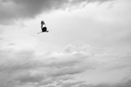 겨울, 경치, 구름의 무료 스톡 사진