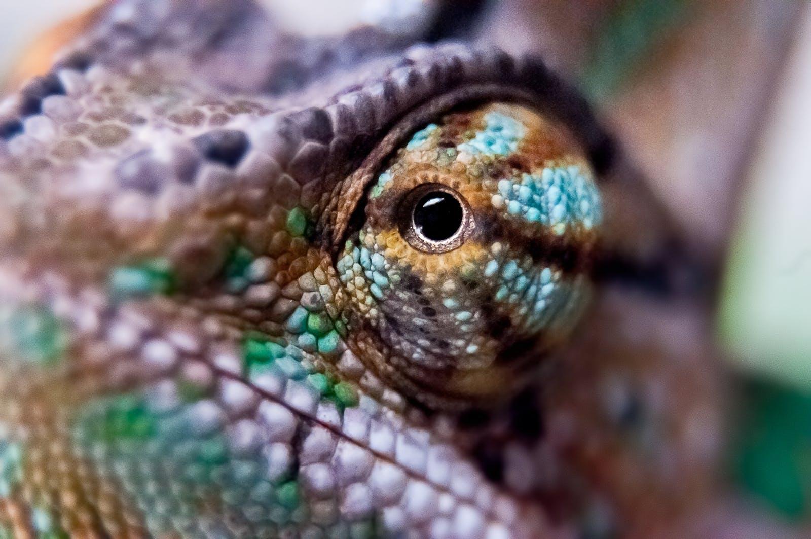 Free stock photo of night, lizard, colour, eye