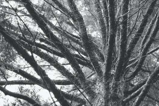 Free stock photo of summer, tree