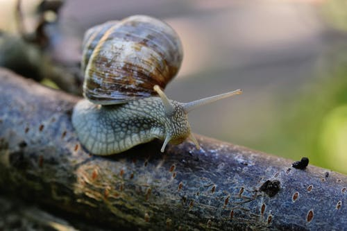 Brown and Black Snail on Brown Wooden Surface