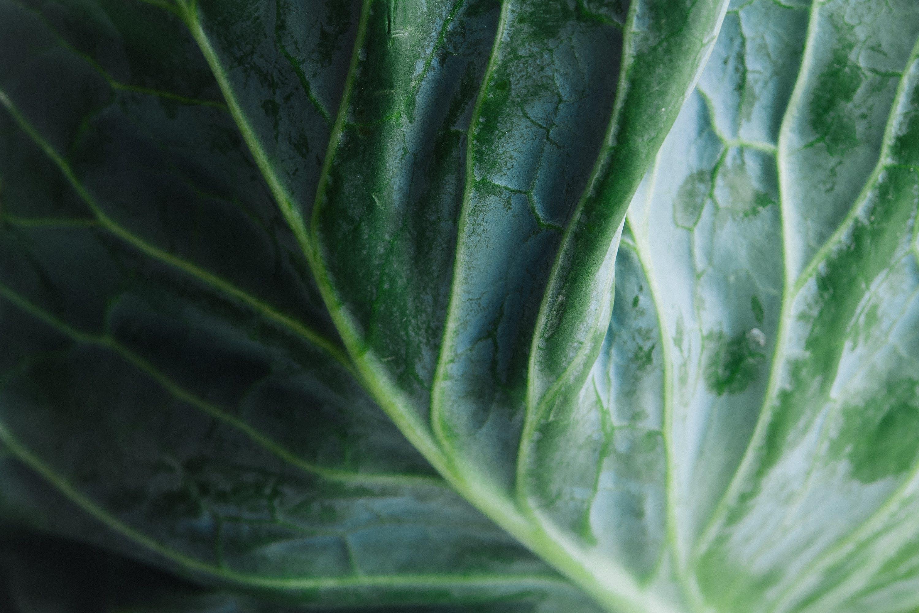 Free stock photo of food, vegetables, lettuce, veggies