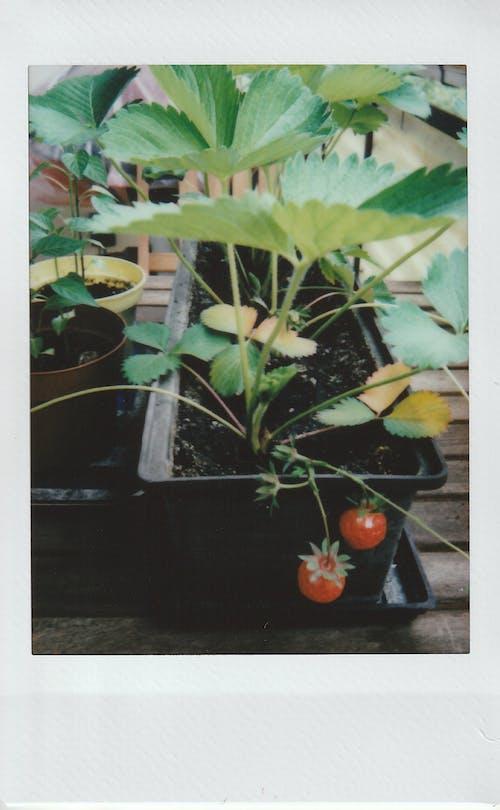 Foto profissional grátis de aumentar, crescer, cultivar