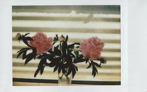 Foto profissional grátis de buquê de flores, filme instantâneo, flor