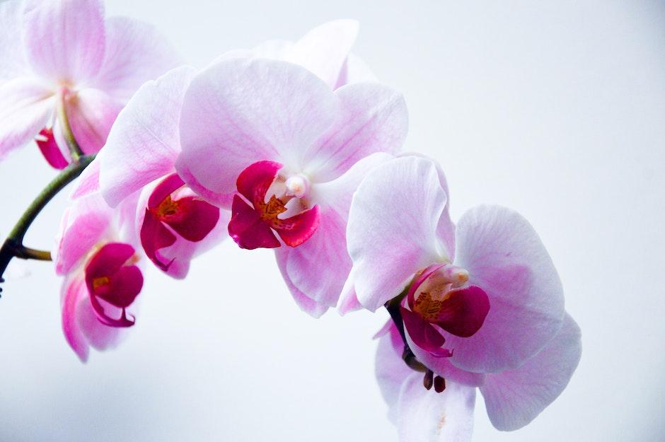 bloom, flora, floral