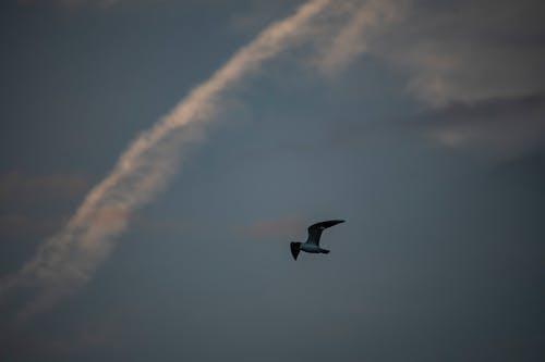 Free stock photo of bird sky