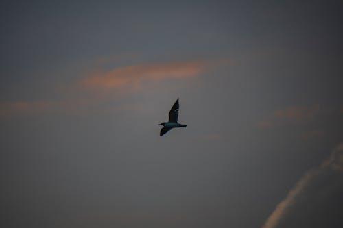 Free stock photo of bird at sunset
