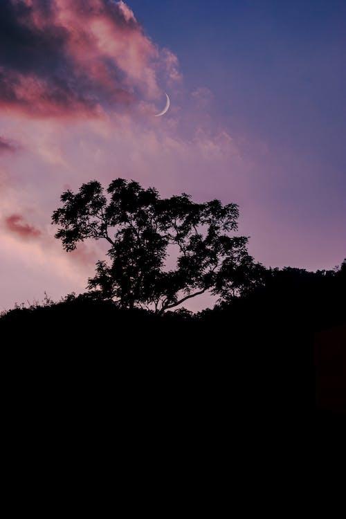 Gratis stockfoto met achtergrondlicht, afgetekend, avond