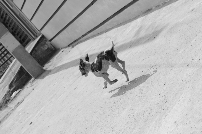 Kostenloses Stock Foto zu #hund, #straße, sprung