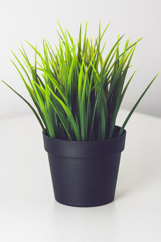 Free stock photo of desk, plant, desk plant