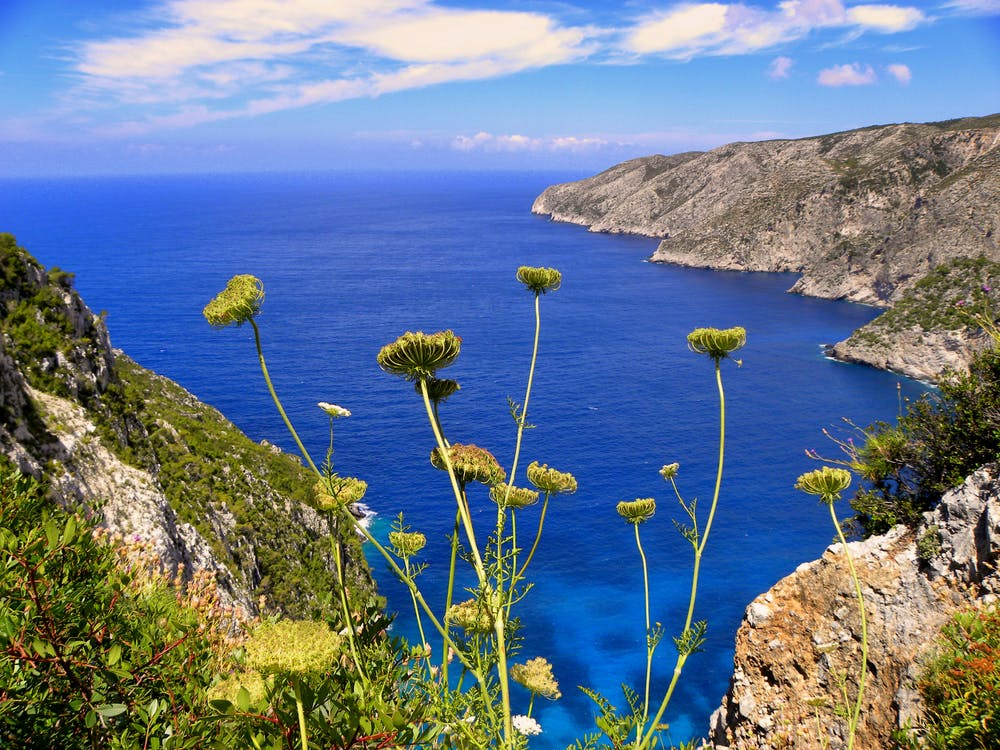 Yellow Chrysanthemums Overlooking Sea View With Mountains