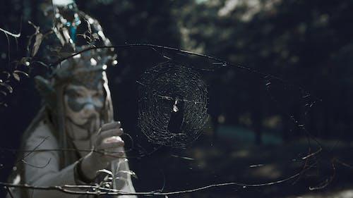 Photos gratuites de araignée, blanc, conceptuel