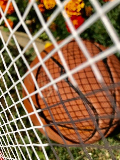 籃球 的 免费素材图片