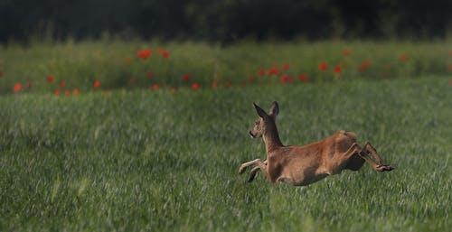 Free stock photo of animals, deer, landscape