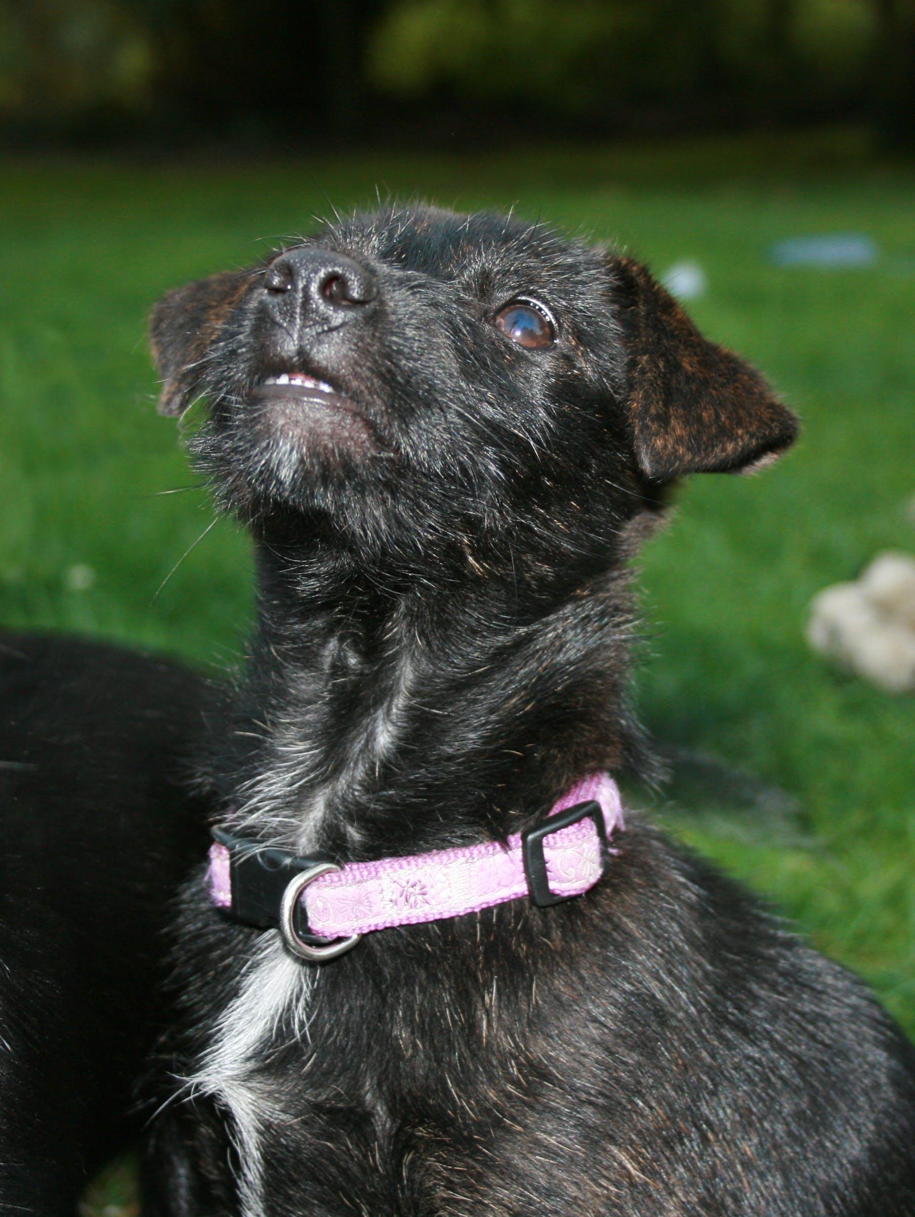 Free stock photo of animal, animal portrait, dog, puppy