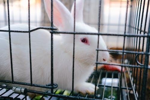 Безкоштовне стокове фото на тему «Вибірковий фокус, впритул, заєць»