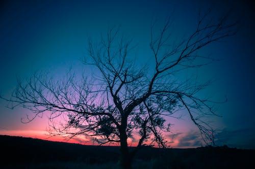 Ingyenes stockfotó ágak, ég, este, fa témában