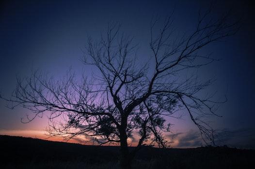 Photo of Autumn Tree during Sunset