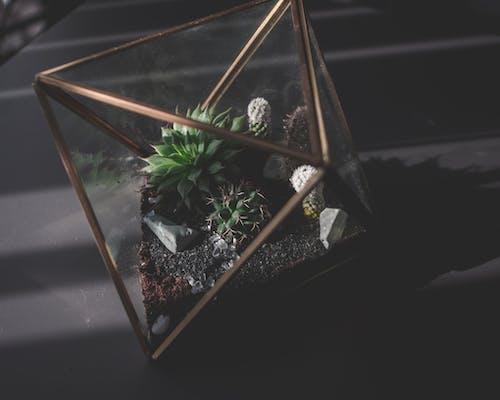 Immagine gratuita di bicchiere, cactus, giardino, impianti