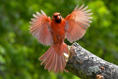 Free stock photo of bird, feathers, in-flight