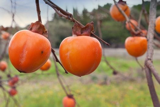 Free stock photo of fruits, orange, fresh, juicy