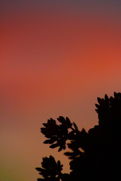 Kostnadsfri bild av abstrakt, bakgrundsbelyst, färg