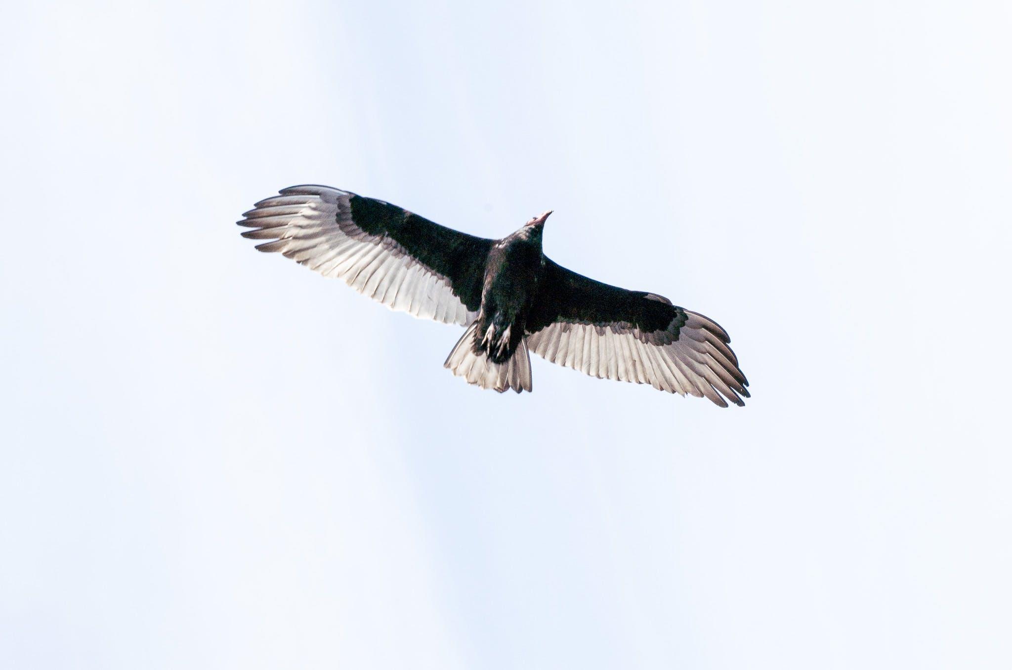 Free stock photo of birds, sea gulls, water birds