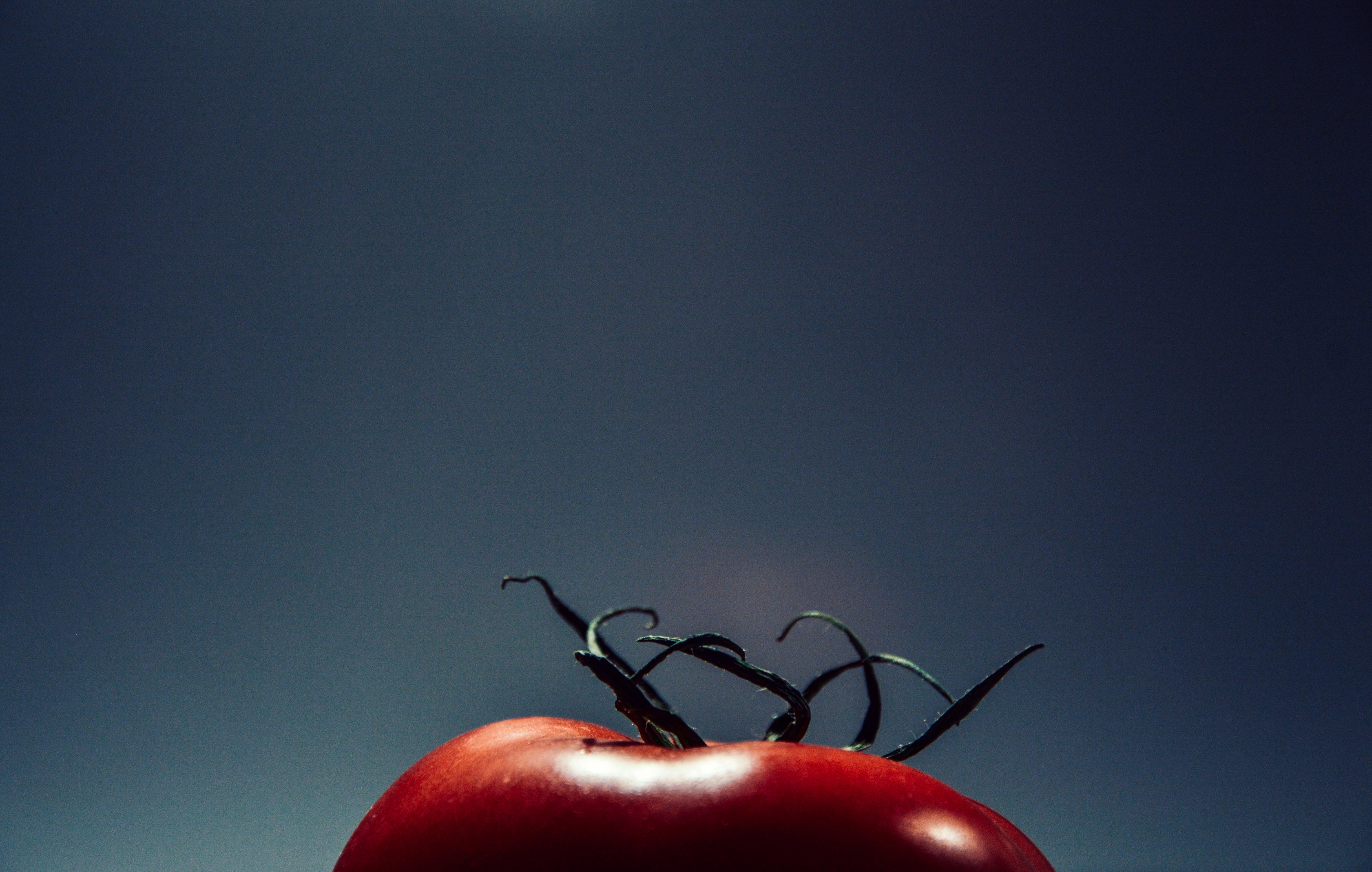 Free stock photo of tomato