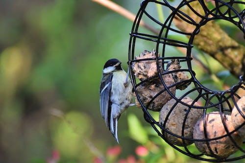 Free stock photo of bird photography, small bird, songbird