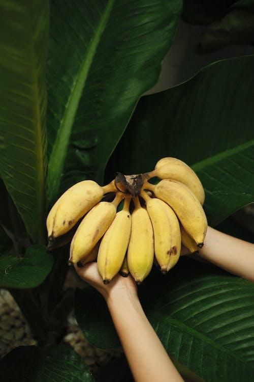 Yellow Banana Fruit on Green Leaves