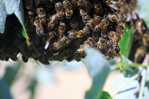 Free stock photo of arctic nature, austria, bee hive
