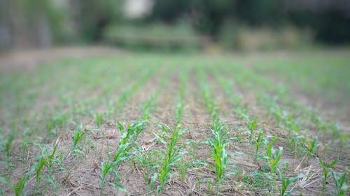 作物, 土壌, 屋外の無料の写真素材