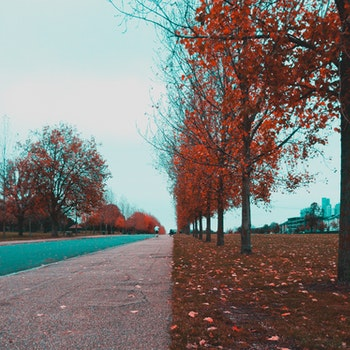 Pathway Between Red Leaf Trees
