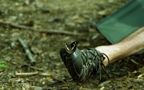 Free stock photo of boot, butterfly, justifyyourlove, leg