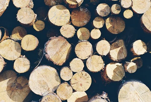 Free stock photo of forest, justifyyourlove, log, logs