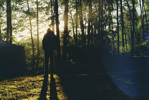 Free stock photo of forest, justifyyourlove, man, shadow