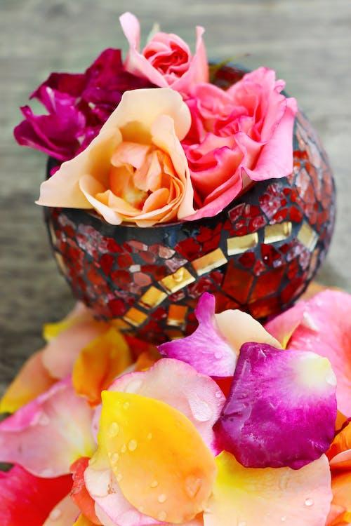 Gratis stockfoto met gele roos, paarse roos, roze roos