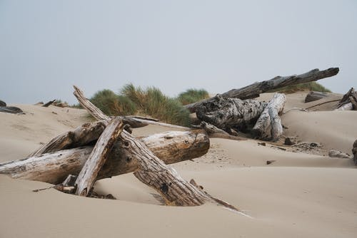 Free stock photo of beach, bird, coast