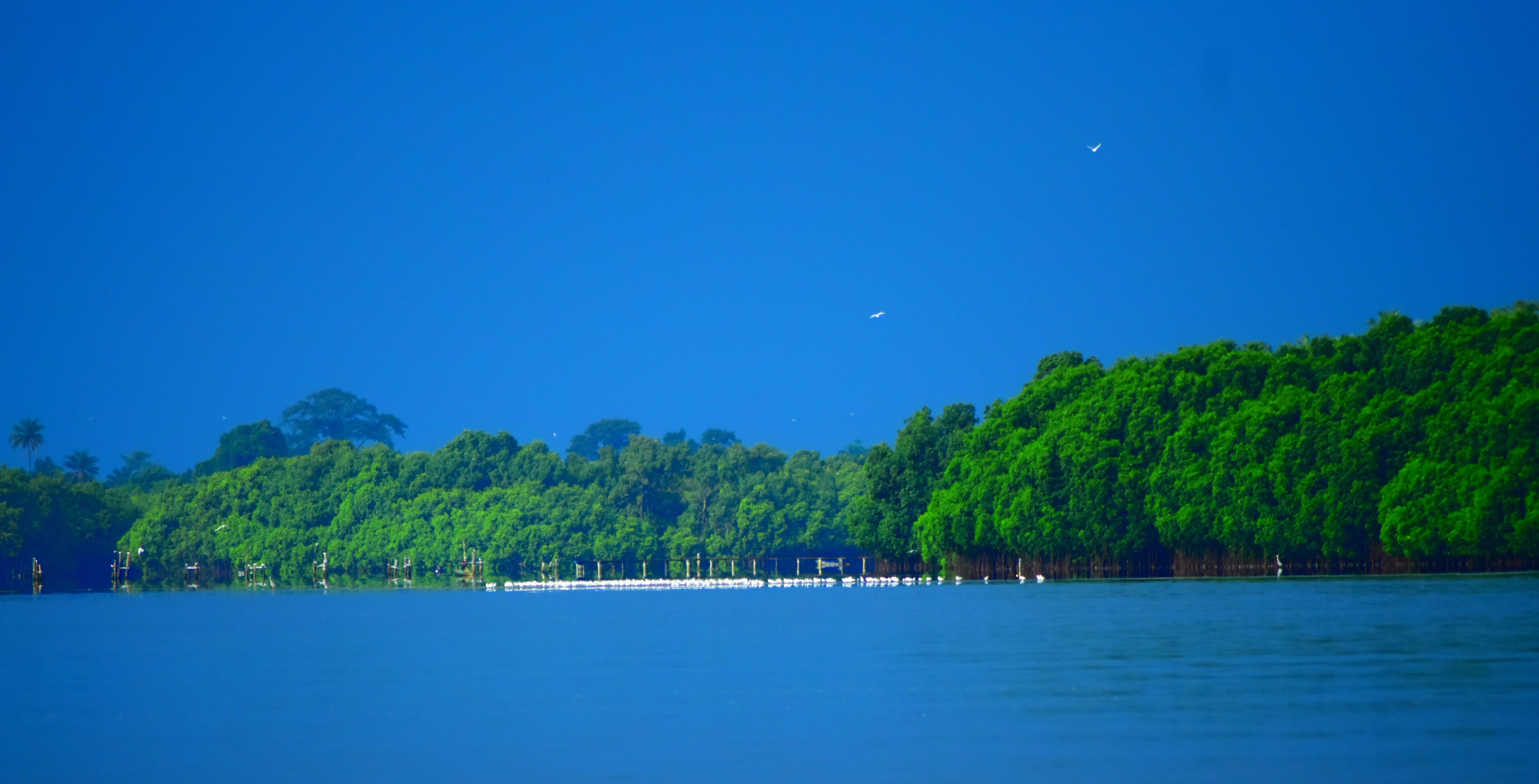 Free stock photo of blue lagoon, ciel bleu, forest, lagune