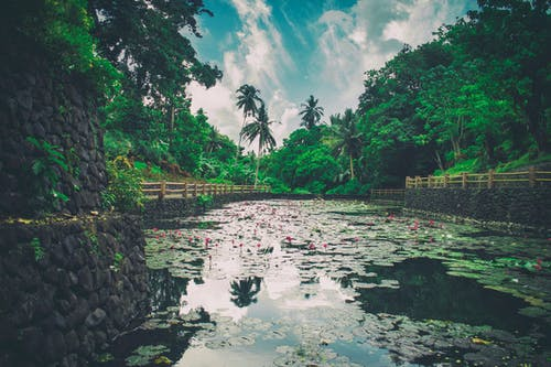Photos gratuites de arbres, bassin, bois, cailloux