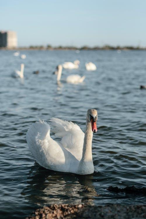 Free stock photo of animal photography, beak, daylight