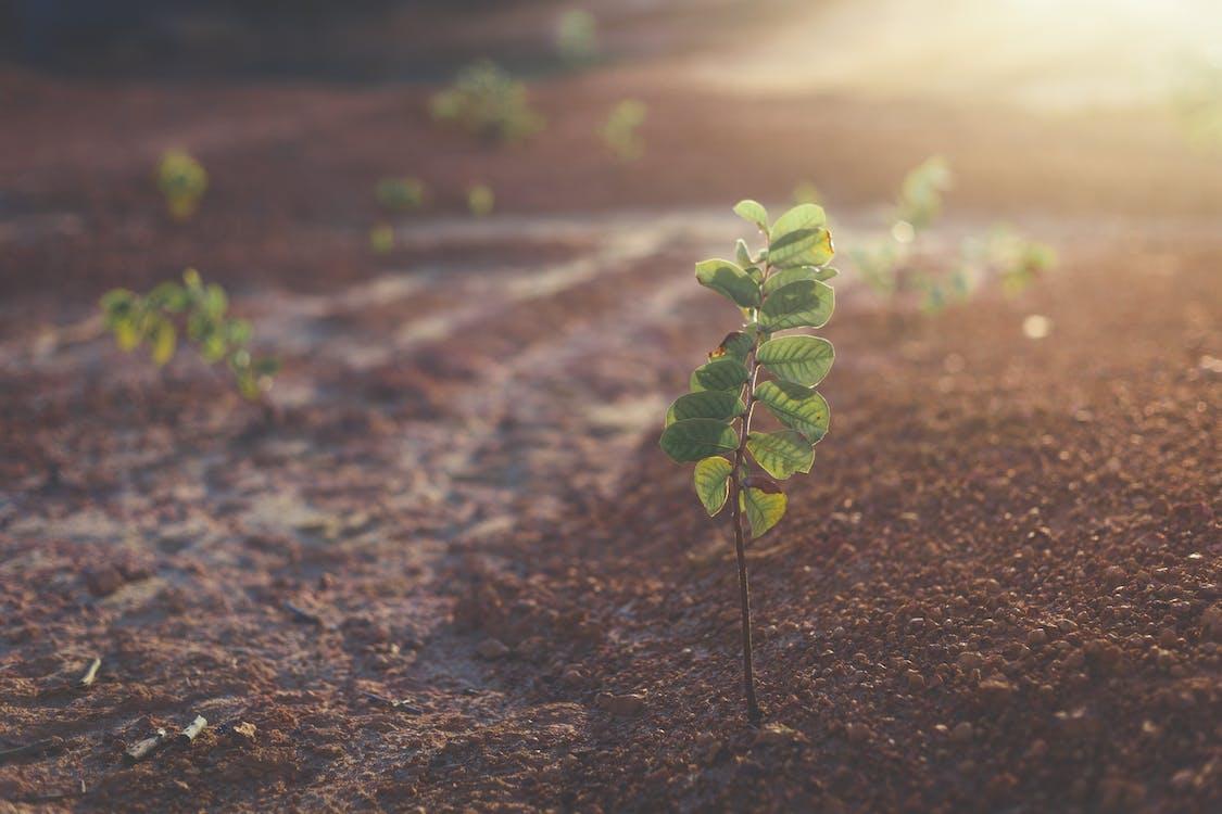 간, 나무, 낮