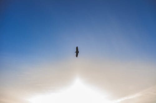 Silhouette Photo of Flying Bird