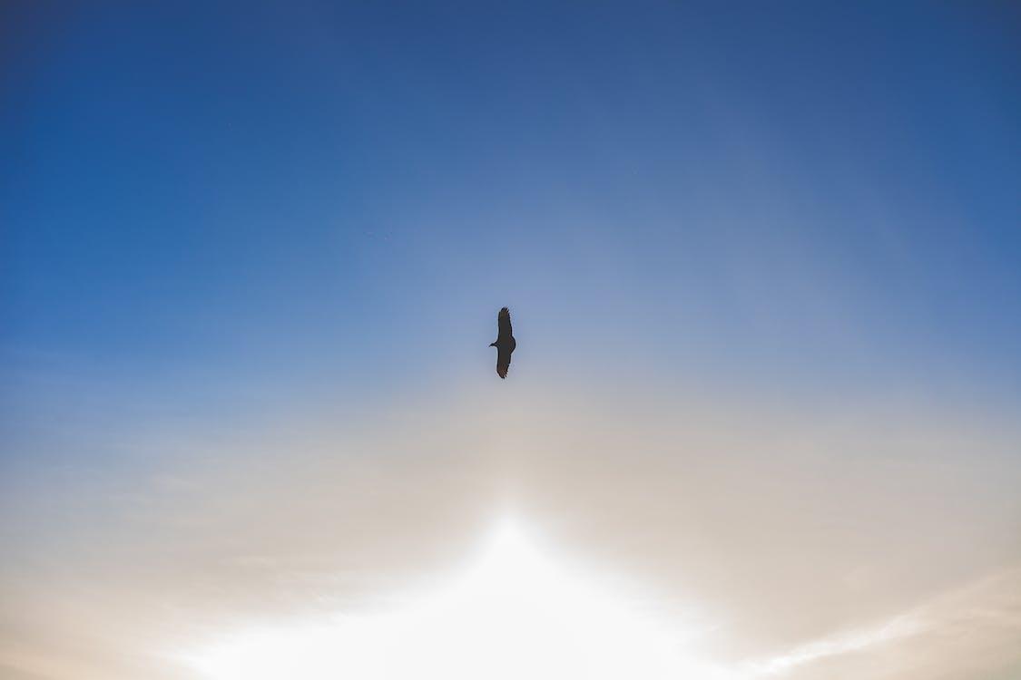 action, ciel, lumière du jour