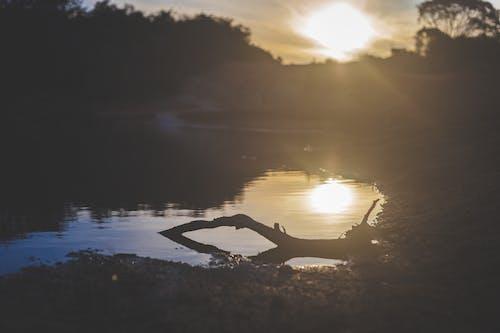 Безкоштовне стокове фото на тему «відображення, вечір, вода, дерева»