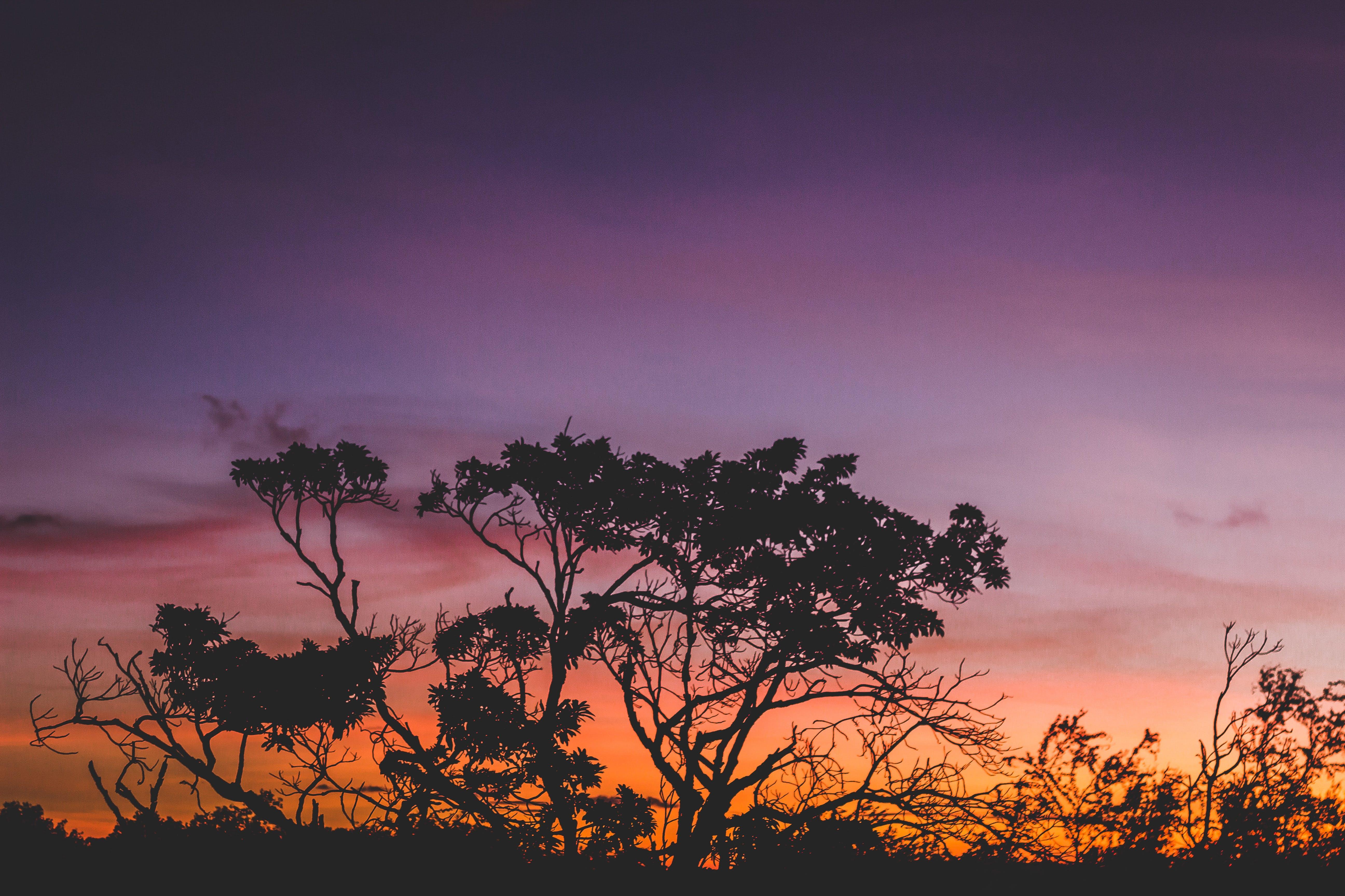Silhouette of Tree during Orange Sunset