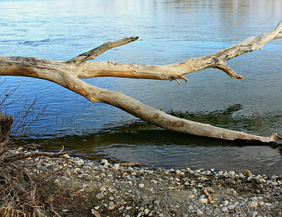Free stock photo of driftwood, log, tree